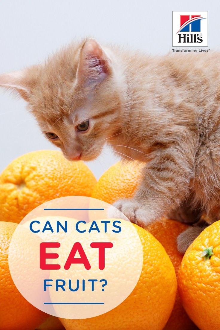 Can i feed my pet fruit hills pet wellness cat food