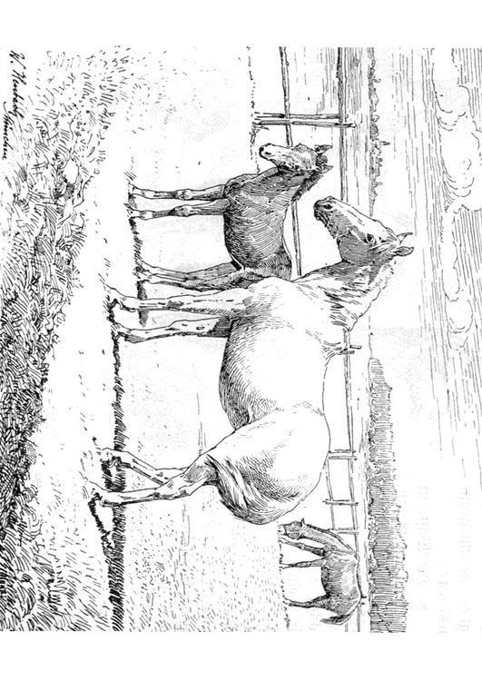 Kleurplaat Paard Met Veulen Kinderen Leren Terwijl Ze Kleuren