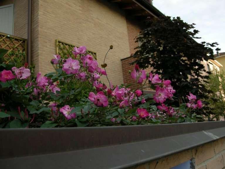 Piante e fiori da balcone resistenti (Foto 2/40)   PourFemme ...