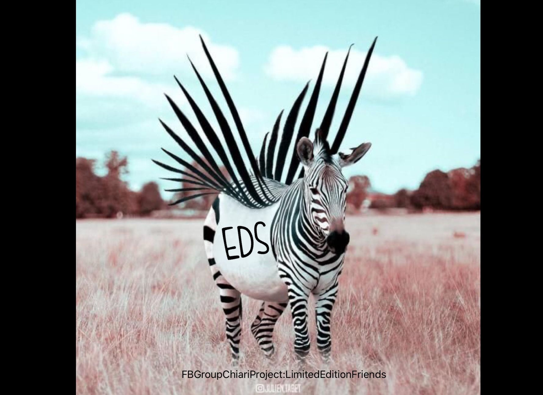 Mohawk in 2020 Zebras, Zebra, Stripes pattern