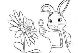 Rtejr Peter Rabbit Peter Rabbit Rabbit Colouring Pages
