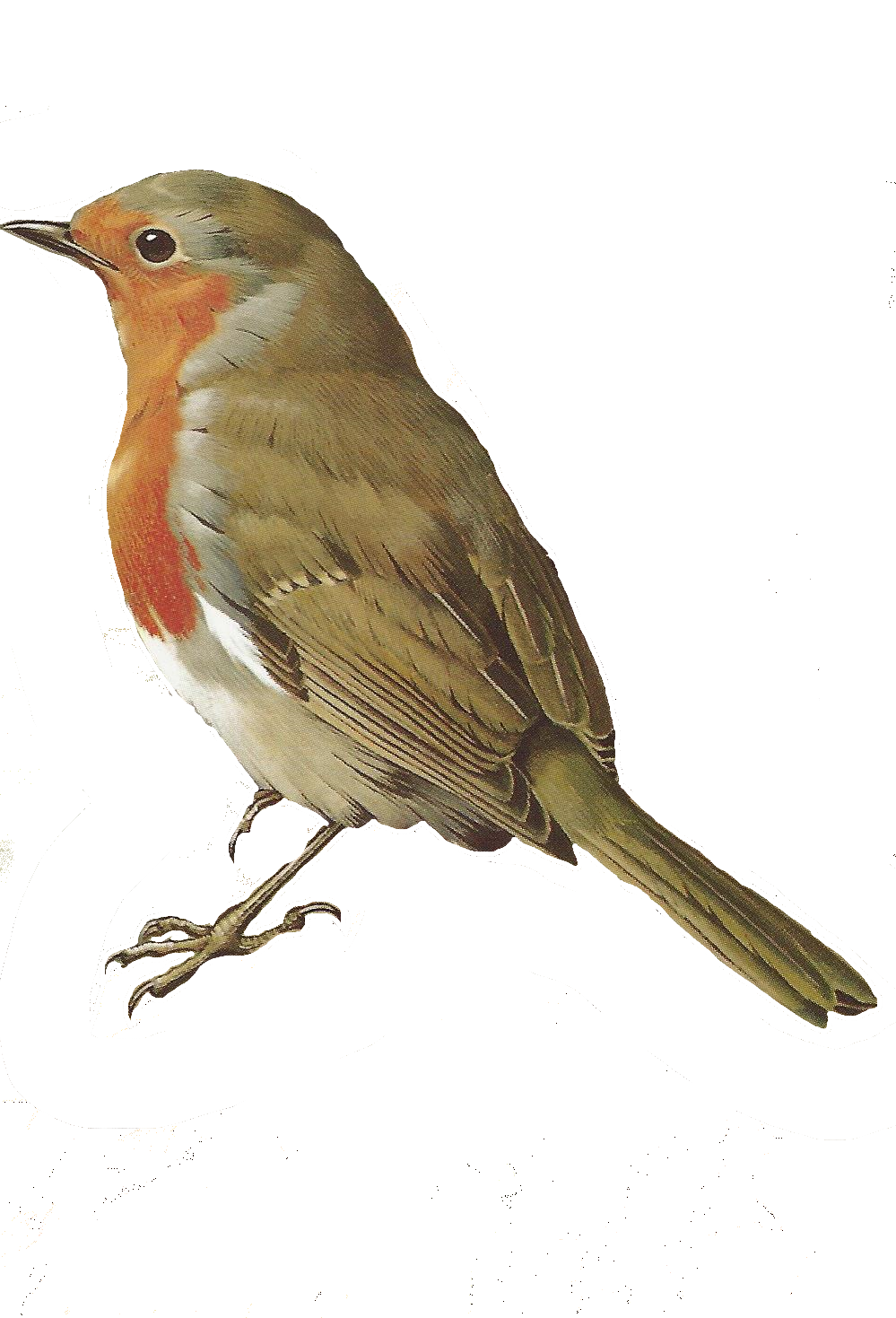 Birds robin. Free images of paper