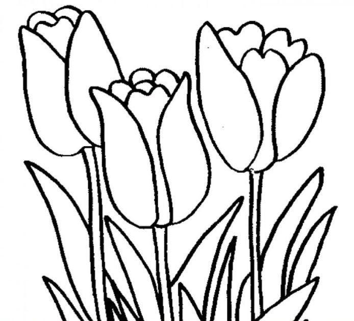 Baru 30 Lukisan Bunga Yang Senang Dilukis 100 Gambar Sketsa Bunga Tulip Yang Mudah Kekinian Gambar Download 20 Contoh Gambar Di 2020 Lukisan Bunga Bunga Cat Air