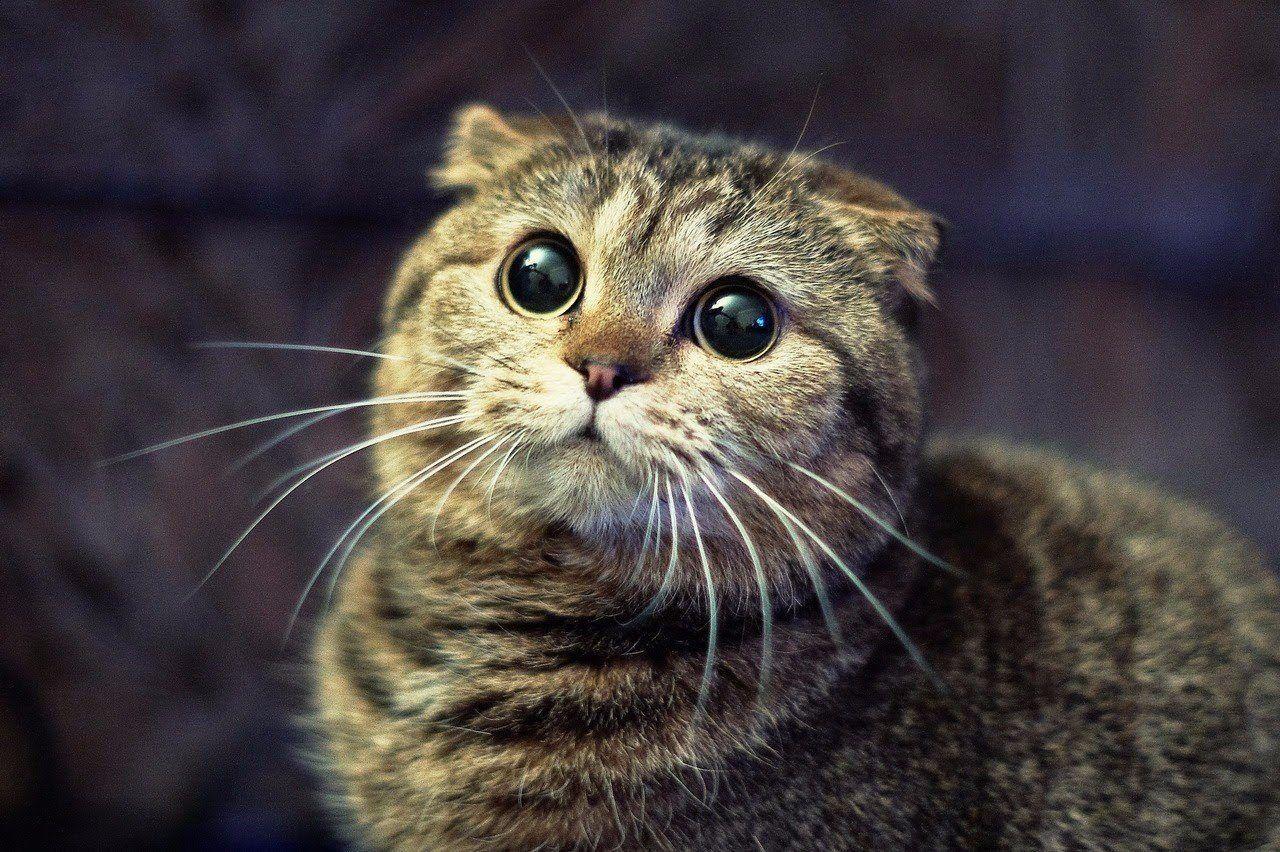 Не обижайте кисок ! Бросить в кошку тапком-все равно что ...