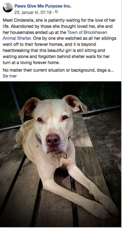 1 23 19 Cinderella Is Still Dreaming And Hoping For Her Fairy Tale Becoming True Will You Help Her Please Ij2 Dog Cat Sweet Dogs Animal Shelter