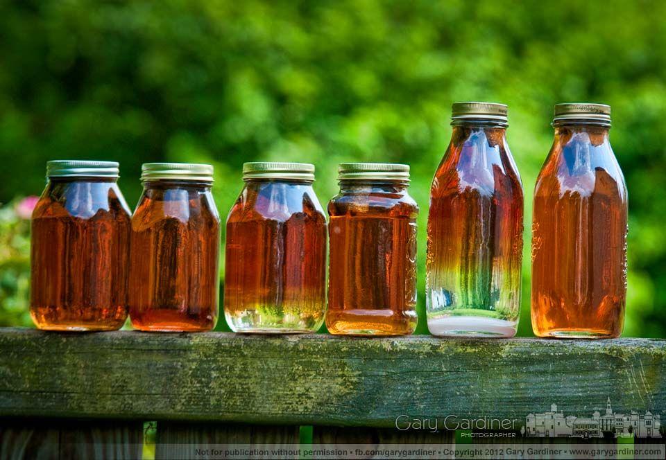 Solar tea varieties