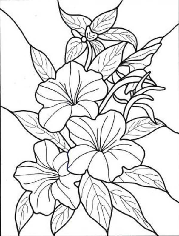 Exotic Flower Coloring Pages Hawaiian Flower colouring pages page