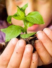ideas to get your child growing and eating veggies with you