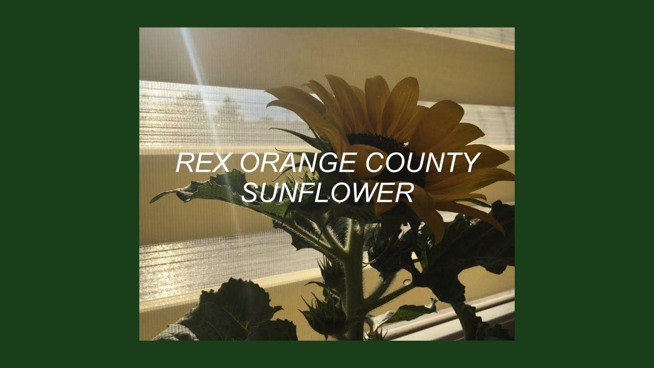 Sunflower Rex Orange County Lyrics Music Jam
