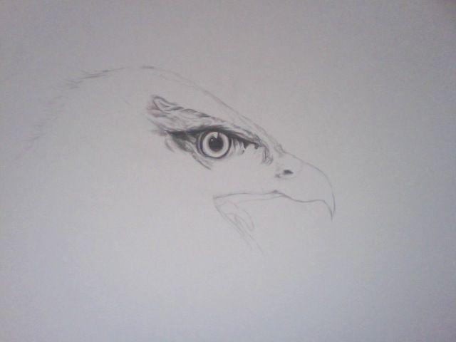 #buzzard, #bird
