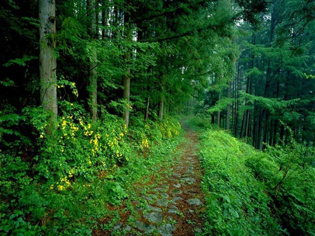 Amazon Com Amazon Forest Wallpapers With Hd Background For