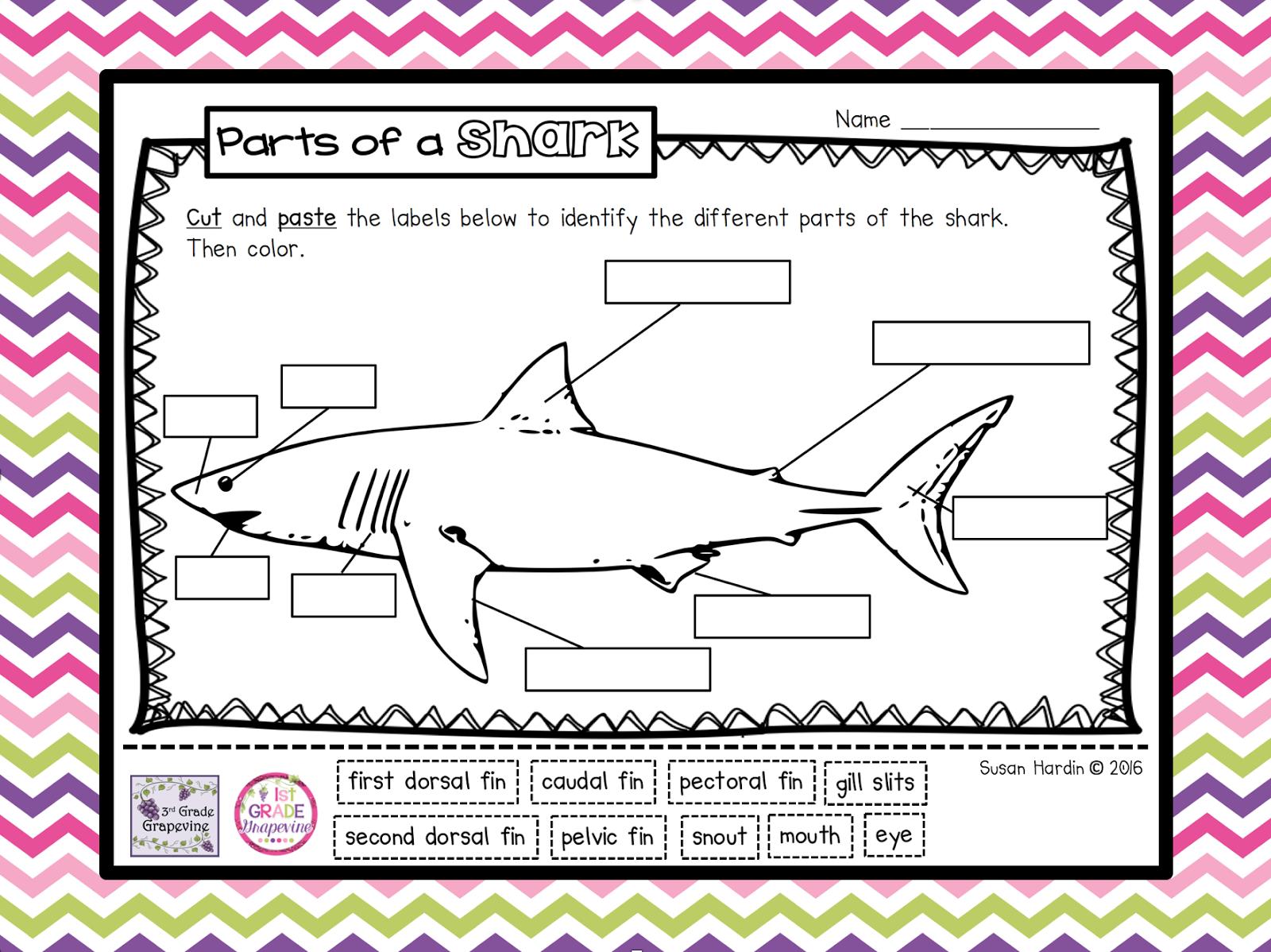 Summer Freebie 2 It S Shark Week