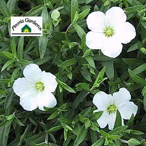 Peoria Gardens Perennials Wholesale Bedding Plant Nursery