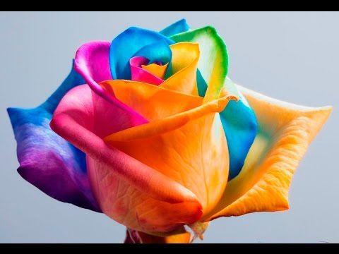 Top 10 Samye Dorogie I Redkie Cvety V Mire Lyubopytnye Fakty Rainbow Roses Rose Seeds Rainbow Flowers