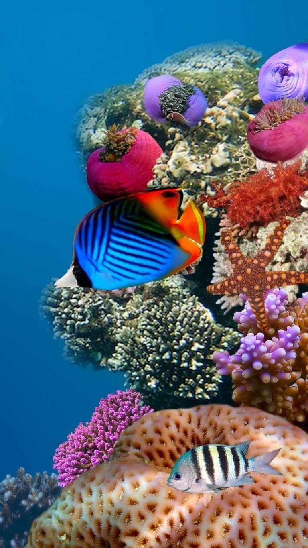 4k Ultra Hd Wallpapers Fish Mobile Underwater Wallpaper Mobile