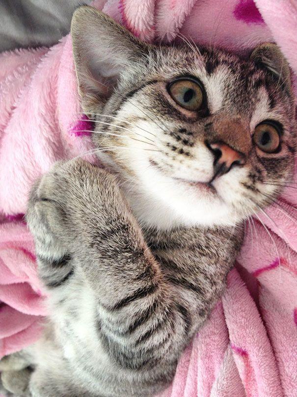 25 chats heureux qui affichent un sourire béat - 2Tout2Rien   Chats  adorables, Animaux adorables, Chats et chatons