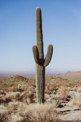 Photo of Kaktus #Pflanze #Nahaufnahme #Fotografie