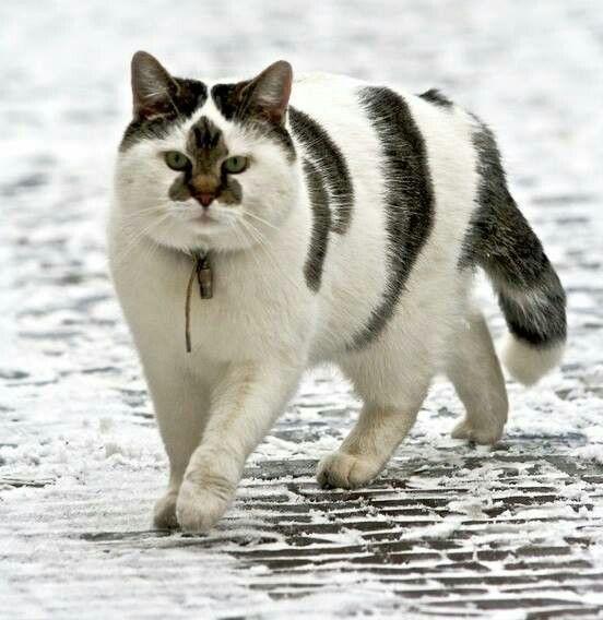 This is one kool kat!!!