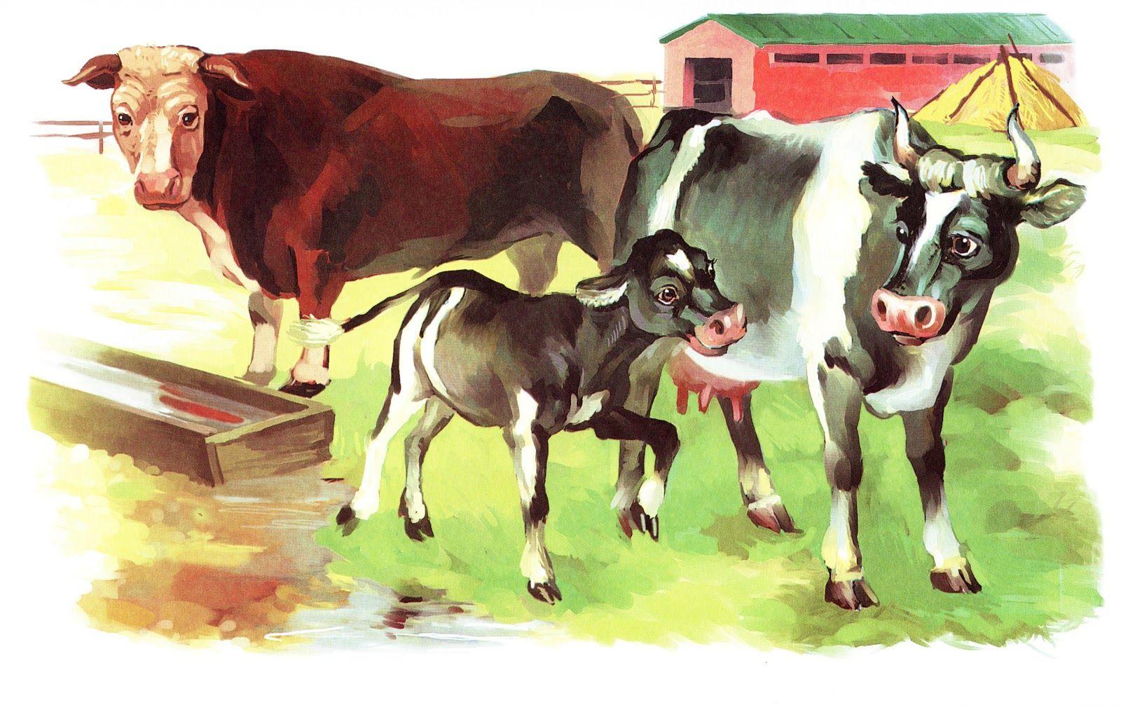 Картинки корова с телятами для детей