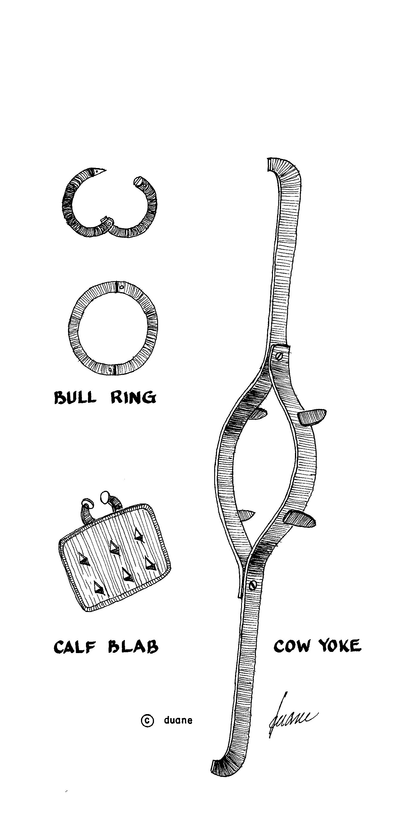 Calf blabs, cow yokes and bull rings. These were all used to get ...