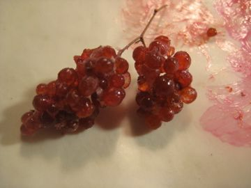 Very convincing red grapes from recycled silica gel spheres + paints + rolling around in chalk etc. - Illustrated tutorial   Source: Studio E