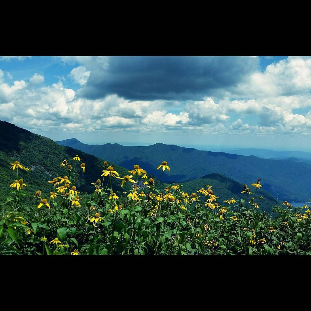 Wildflowers on the mountain top at the Craggy Gardens Pinnacle on the beautiful Blueridge Parkway in North Carolina - #wildflowers #daisies #craggygardens #craggygardenstrail #blueridgeparkway #mountainview #viewfromthetop #hiking #exploring #topoftheworld #beautifulday #postcardperfect #beautifulsky #clouds #mountains #northcarolina #blueridgeparkway Wildflowers on the mountain top at the Craggy Gardens Pinnacle on the beautiful Blueridge Parkway in North Carolina - #wildflowers #daisies #cragg #blueridgeparkway