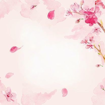 桜の花の背景水彩画 ベクターアートイラスト 桜イラスト 桜 イラスト デザイン 花 イラスト