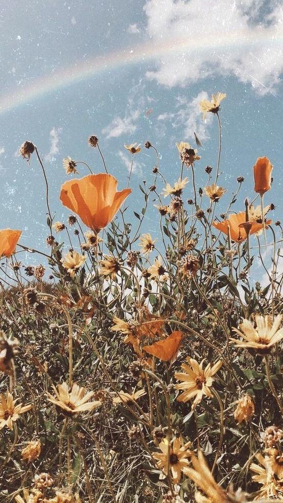 retro colorful flowers