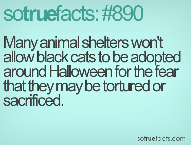 many animal shelters wont allow black cats to be adopted around halloween for the - Crazy Halloween Facts