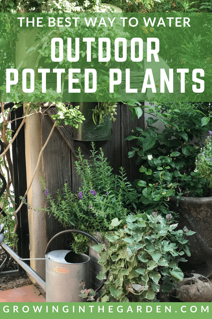 The Best Way To Water Outdoor Potted Plants Potted 400 x 300