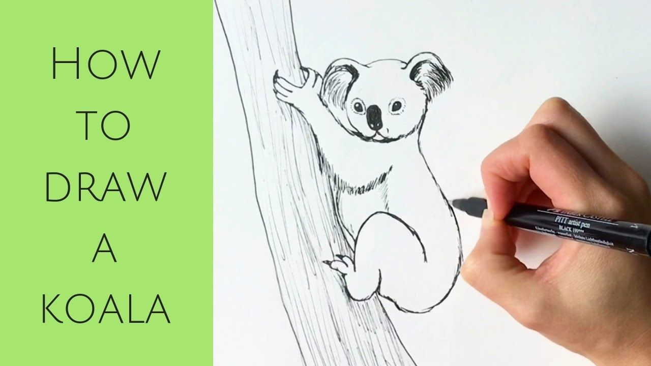 Beginners How To Draw A Koala Youtube Koala Drawing Drawings Koala