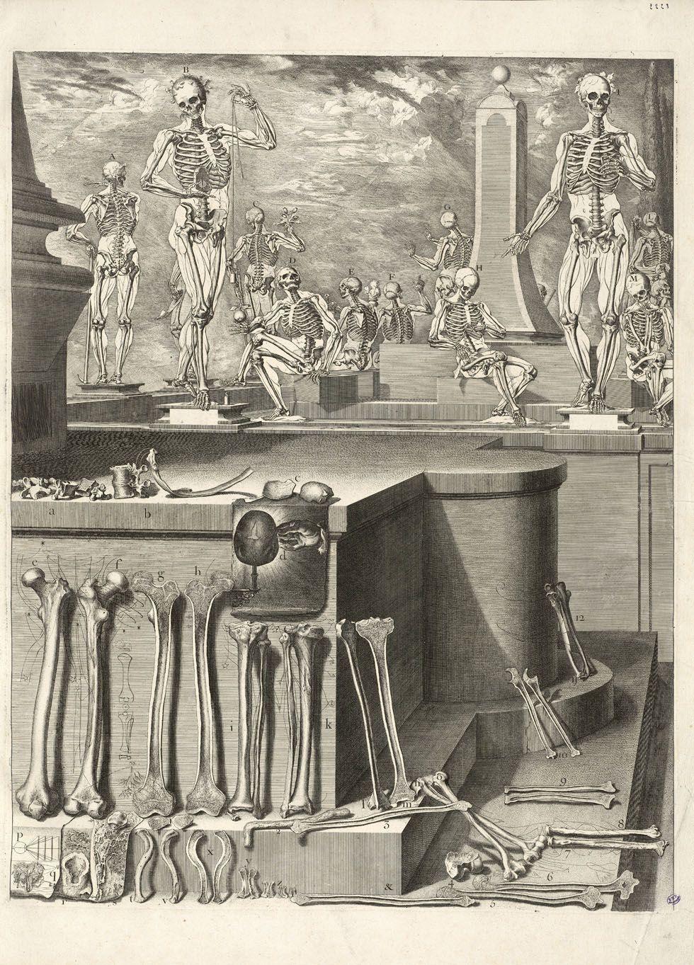 Planche anatomique gravée en 1689 par Martinez Chrysostome | Inspire ...