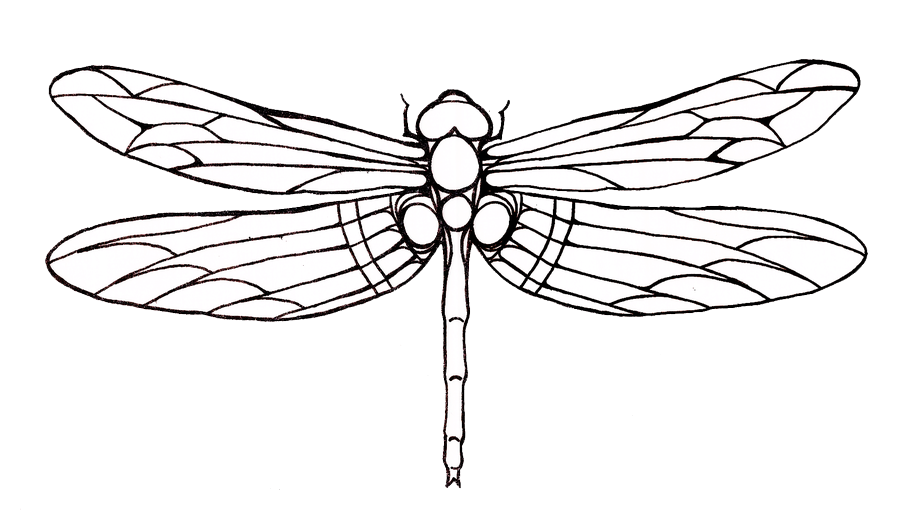 Dragonfly Tattoos Png Png Image Dragonfly Drawing Dragonfly Art Dragonfly Tattoo