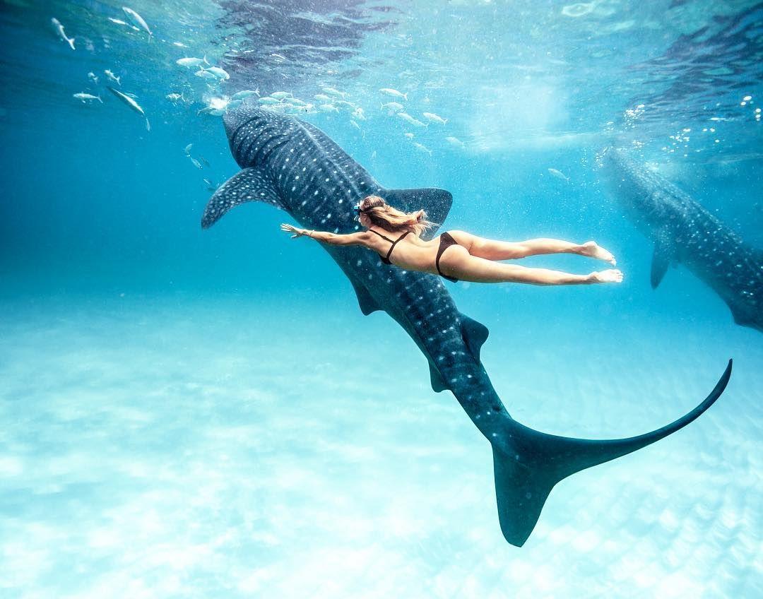 Nell Arcipelago Delle Filippine Fai Il Bagno Con Lo Squalo Balena