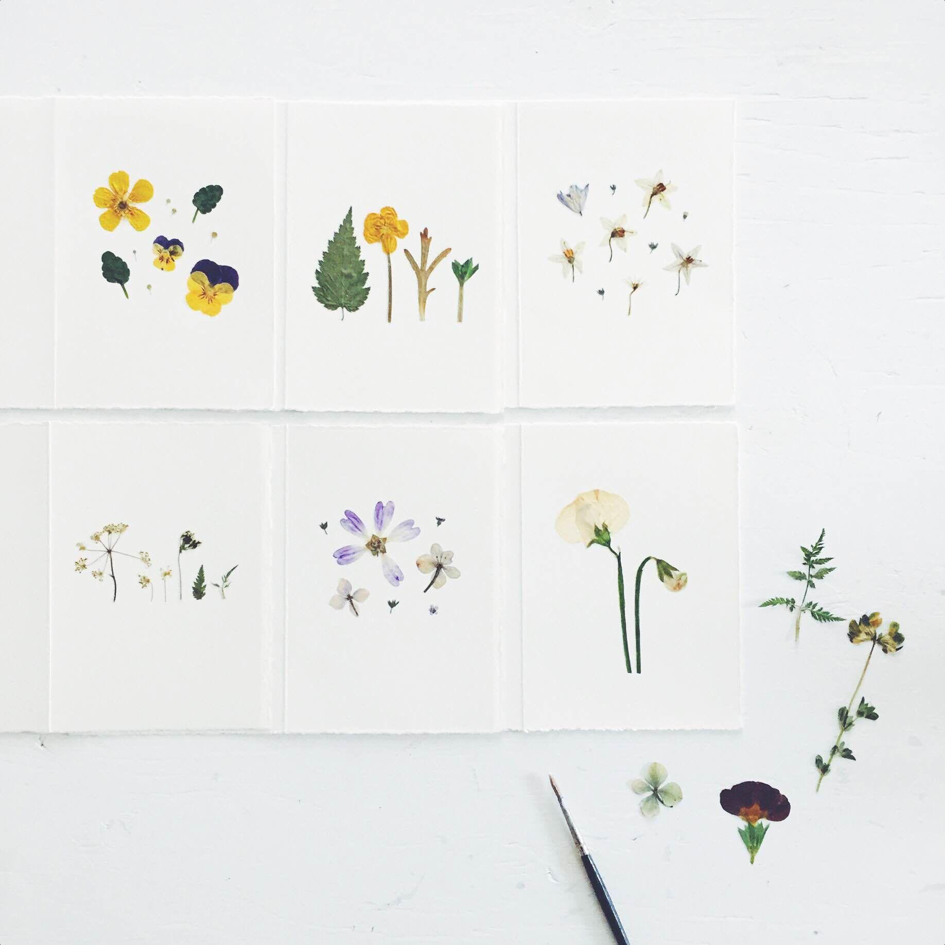 Pressed flower artworks from mr studio london flower artwork pressed flower artworks from mr studio london mightylinksfo