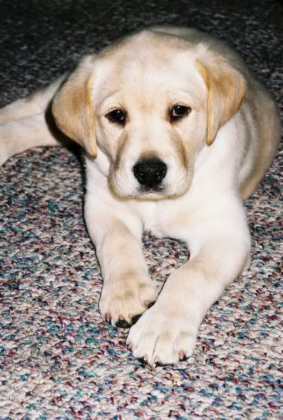 Marley Cute Puppy Susse Tiere Hunde Tiere