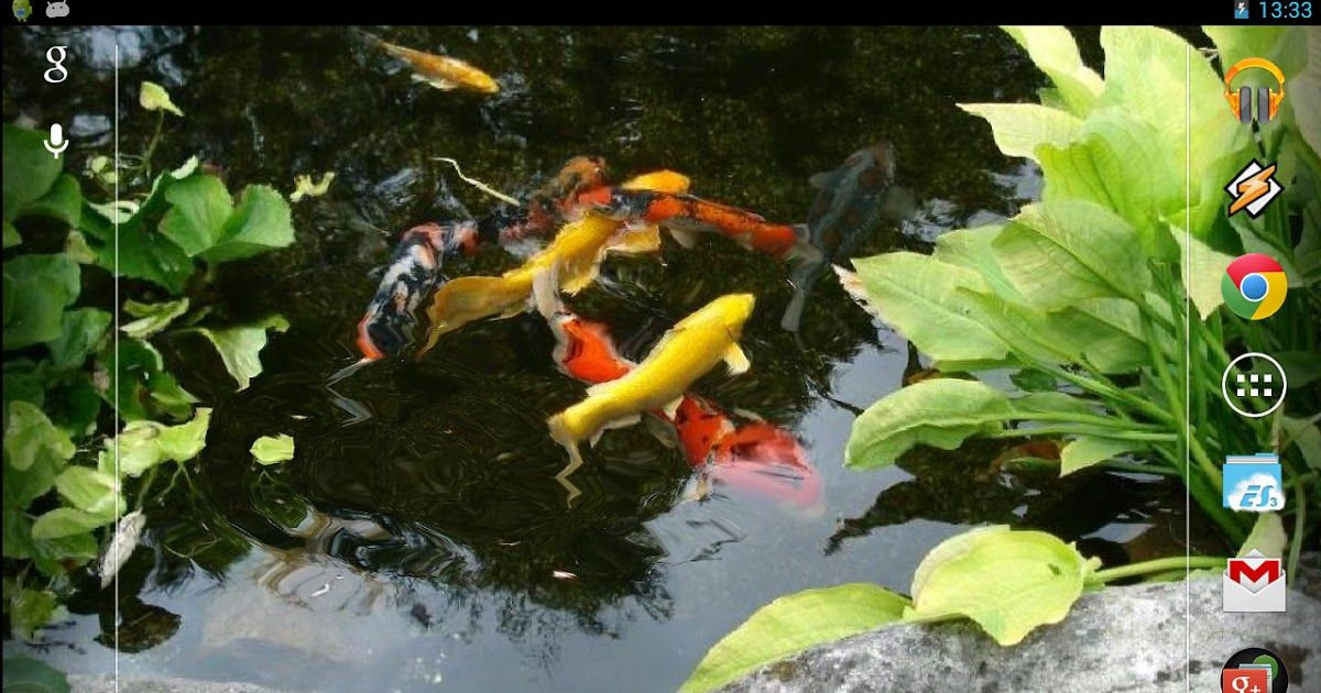 Pin By Arif On Live Wallpapers In 2020 Live Wallpapers Fish Wallpaper Koi Fish