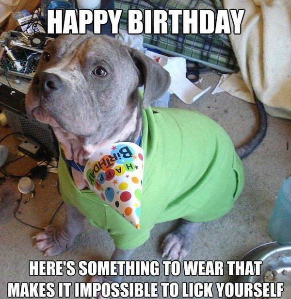 100 Ultimate Funny Happy Birthday Meme's   Happy birthday ...