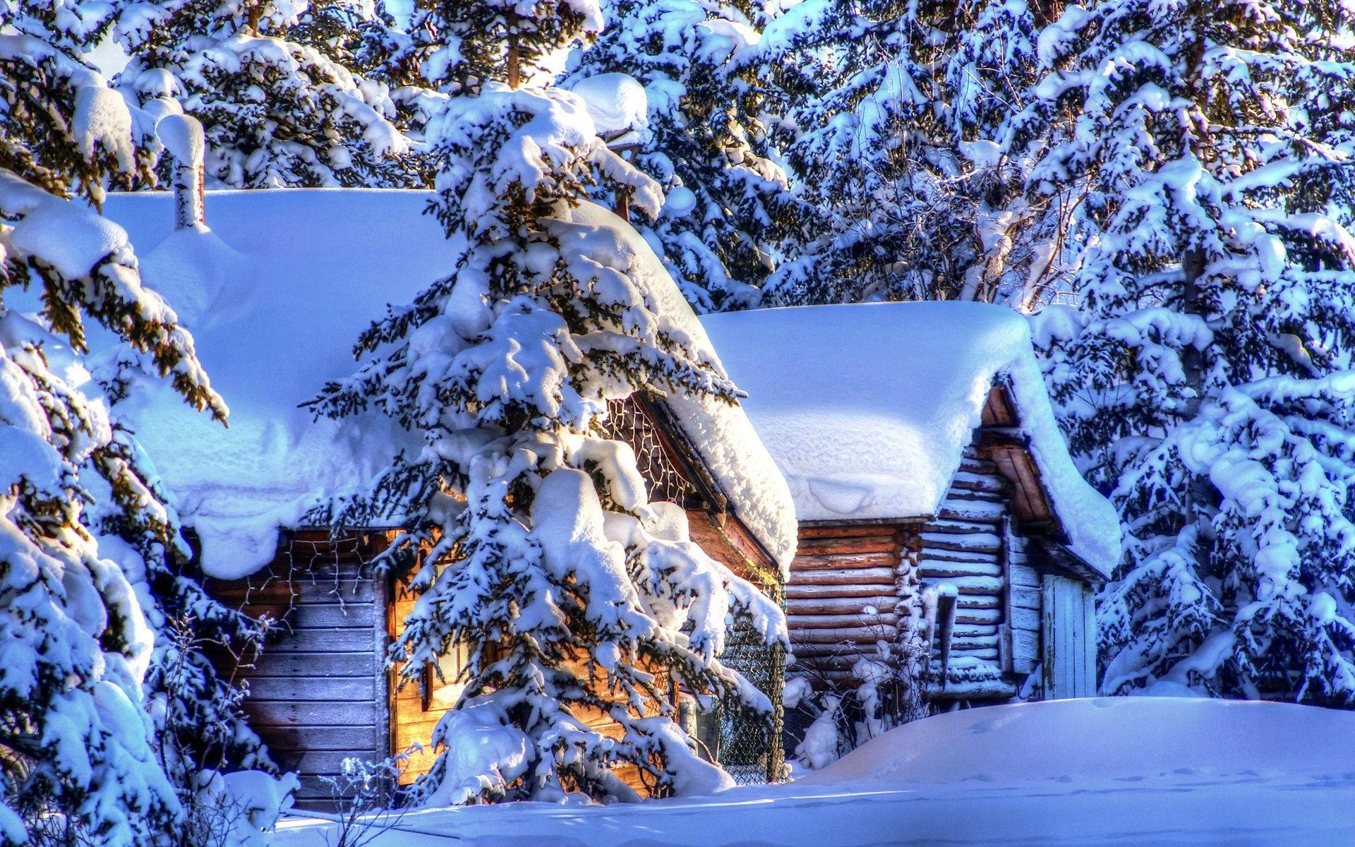 Alaska Paysage D Hiver Neige Foret Sapin Cabanes Fonds D