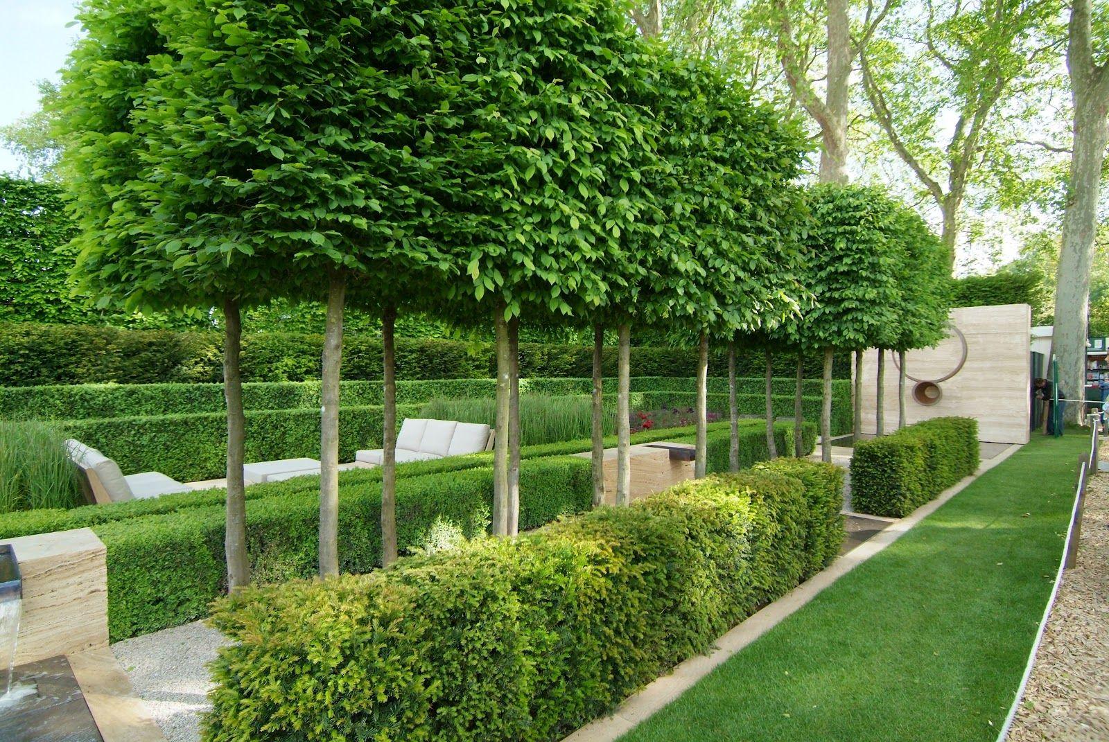 Garden trees for screening  Deze moderne tuin is ontworpen met strakke kaders en statige hagen