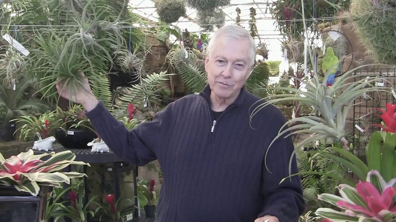Paul Isley Rainforest Flora Inc Ask Mr Tillandsia 5