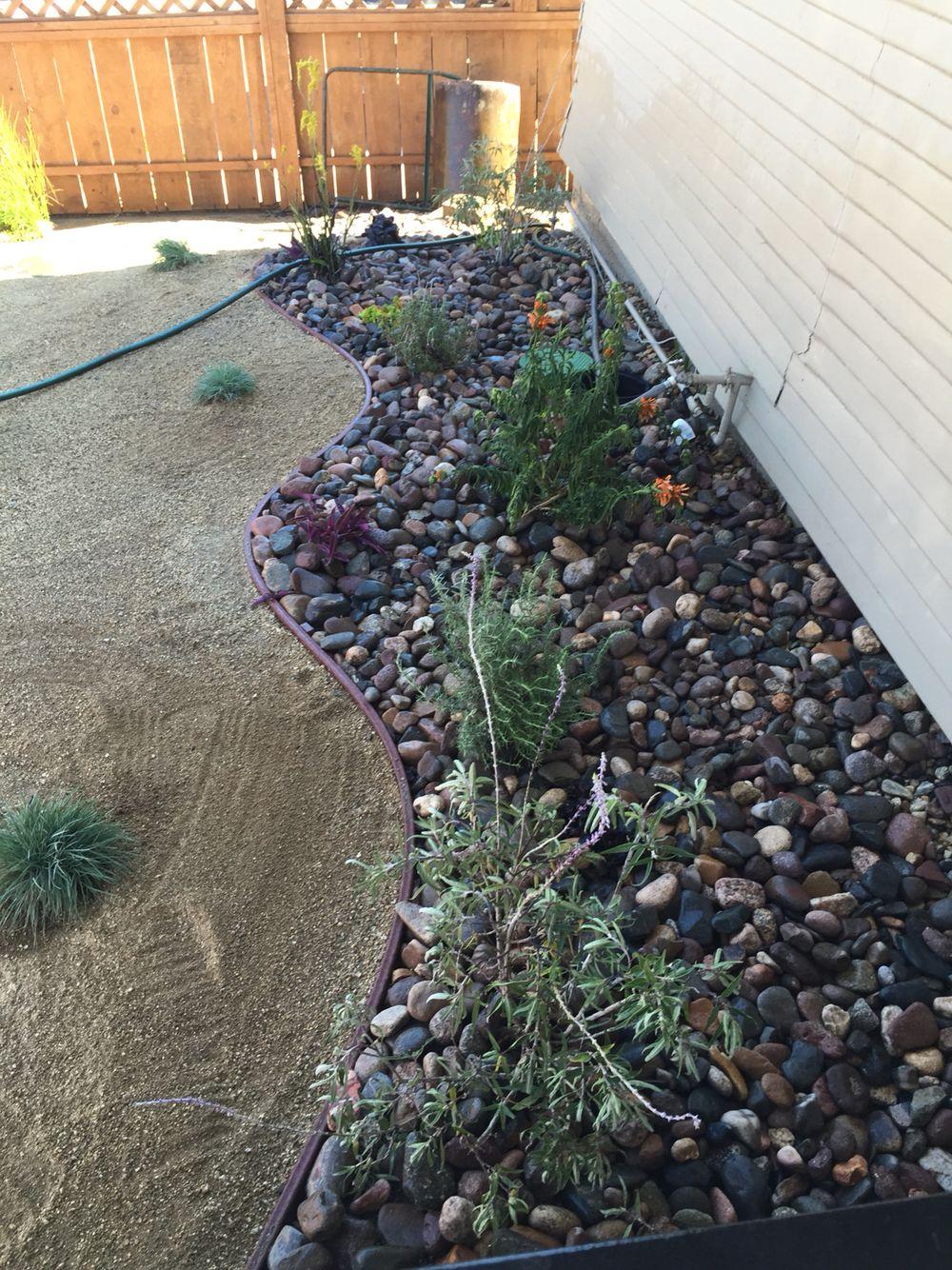 Drought free yard! Thank you Jorge. #terrabellanursery ...