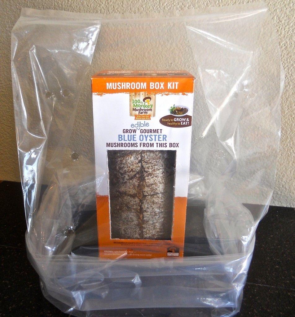 Place Humidity Tent on Mushroom Box Kit | Mushrooms | Stuffed