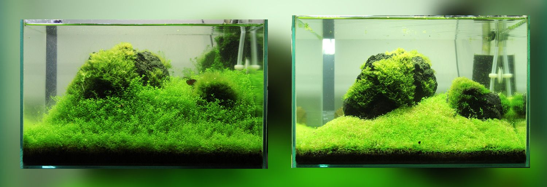 Wie weit Bodendecker schneiden Aquascaping Pinterest - deko fur aquarium selber machen