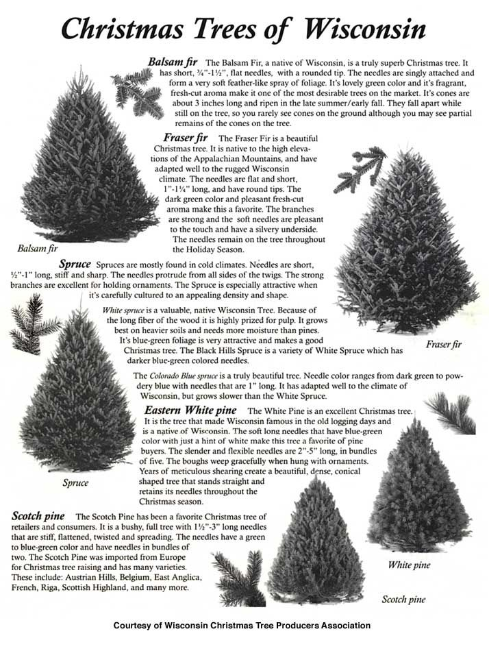 Wisconsin Christmas Trees | Tree, Christmas
