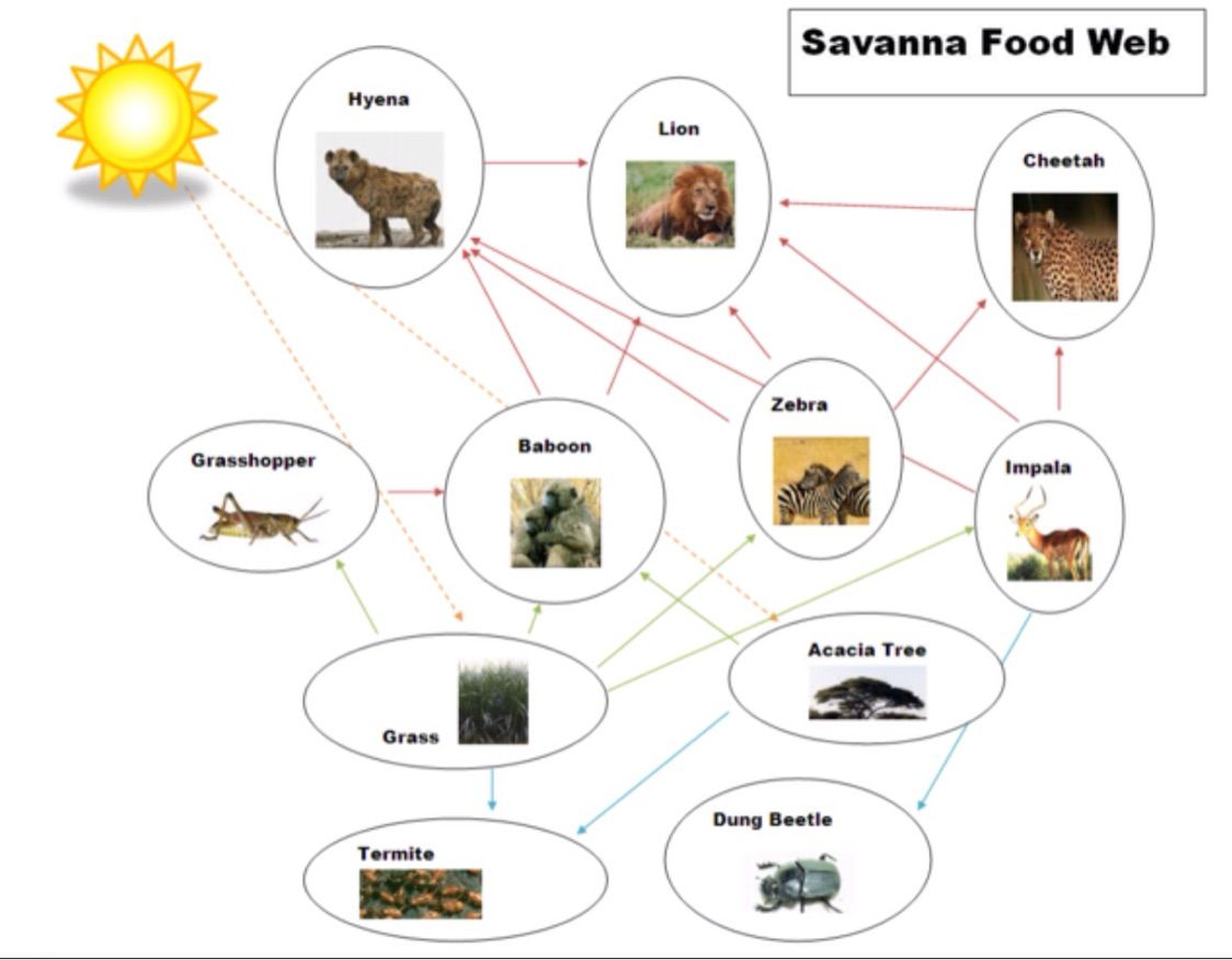 Rainforest Food Web Diagram Webdiagrampng Ee E Fea A Taylor Pinterest Co Uk California Chaparral Tropical