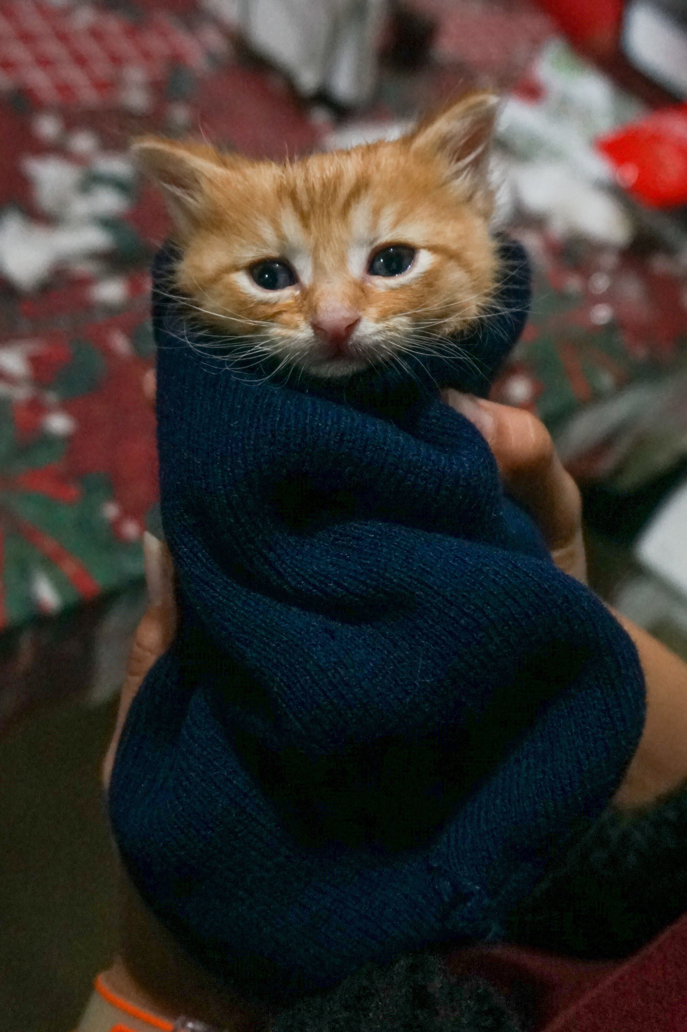 I Didn T Want It To Get To This But You Ve Left Me No Choice I Raise You A Kitten Burrito Http Ift Tt 2t2uycq Kittens Cute Pictures Puppies