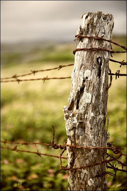 Barbed Wire Post Country Fences Country Photography Old Fences