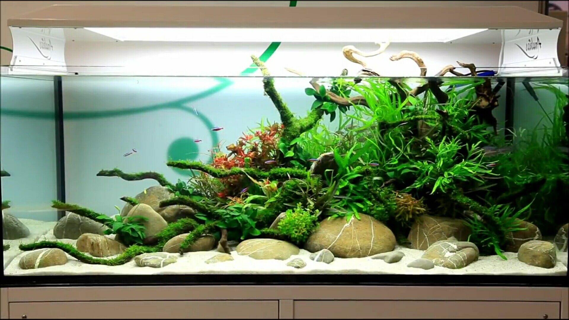 049aa52f9cb5f10c7309d92d3b1b8a80 Incroyable De Aquarium Deco Des Idées