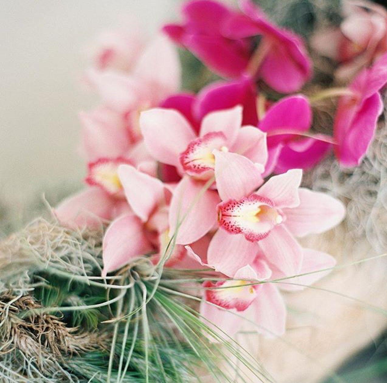 Pink Hawaiian flowers
